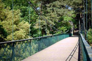 Alum Chine Suspension Bridge